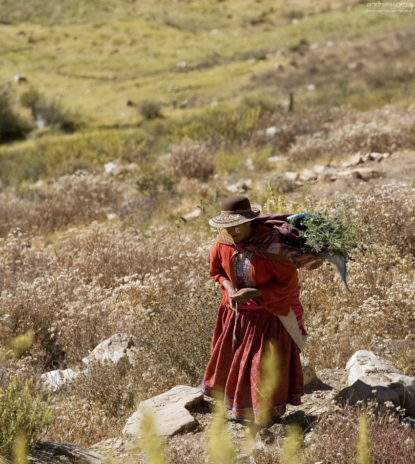 http://www.andreev.org/albums/Colca%20Canyon/images/066PE.jpg