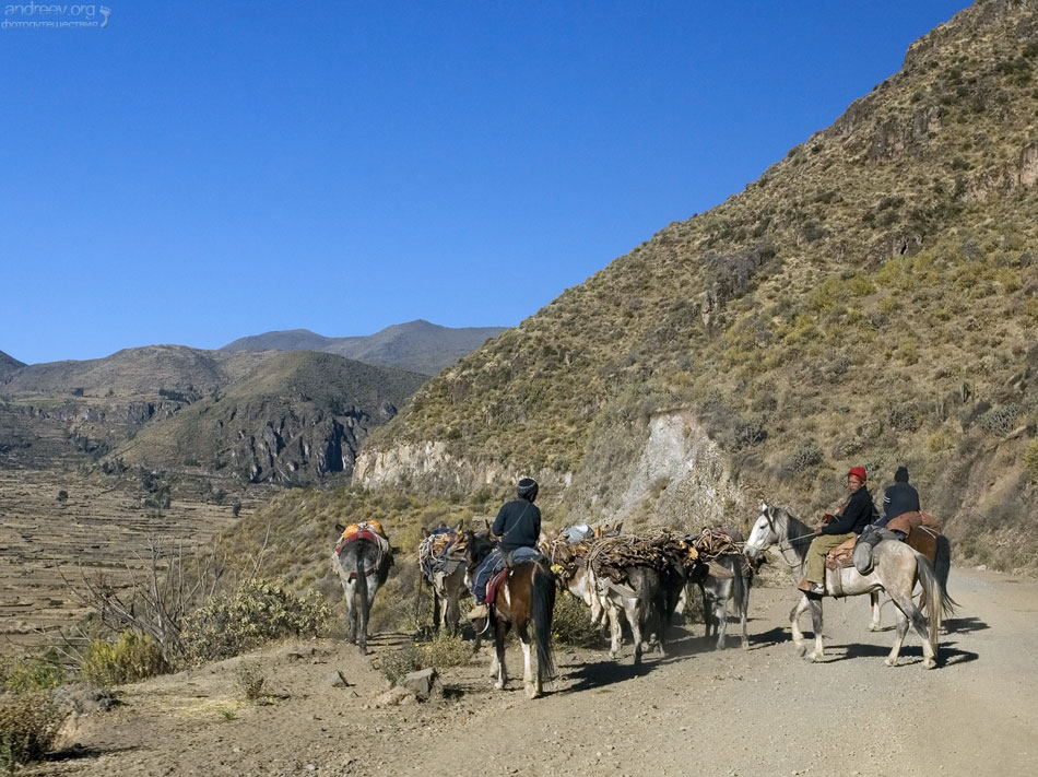 http://www.andreev.org/albums/Colca%20Canyon/images/071PE.jpg