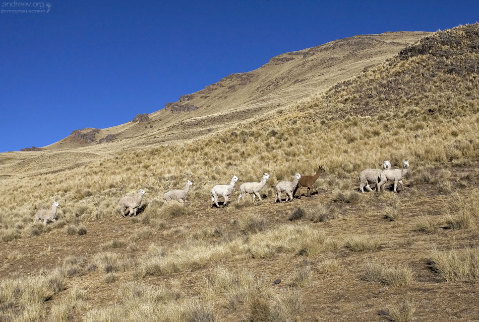 http://www.andreev.org/albums/Colca%20Canyon/images/099PE.jpg