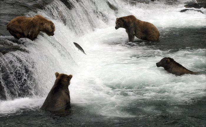 И... Один на всех и все на одного!  Вдруг из лесу вышел медведь.