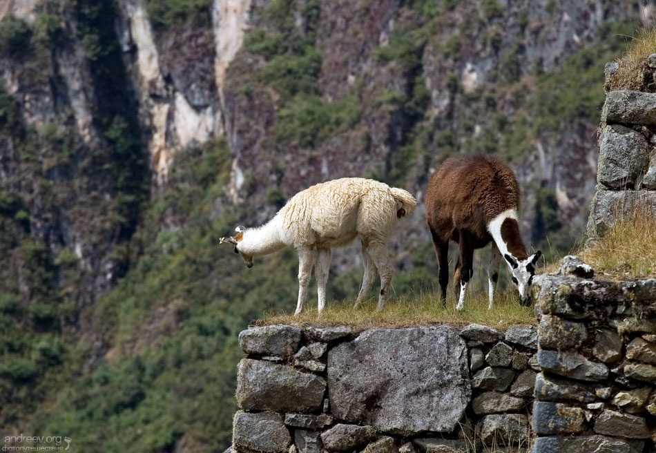 http://www.andreev.org/albums/Machu%20Picchu/images/339PE.jpg