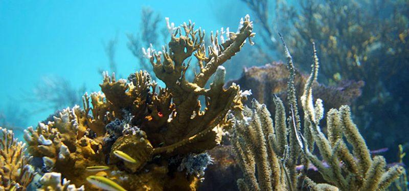 Белиз: подводные фотографии