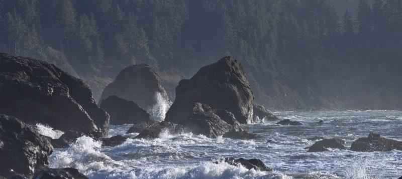 Вдоль побережья Северной Калифорнии: Redwood National Park