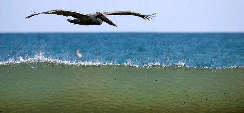 Фотографии побережья Тихого океана, Коста-Рика