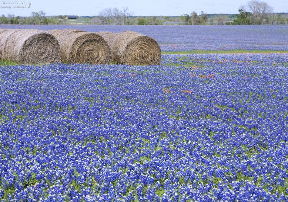 Техас: побыкуем?