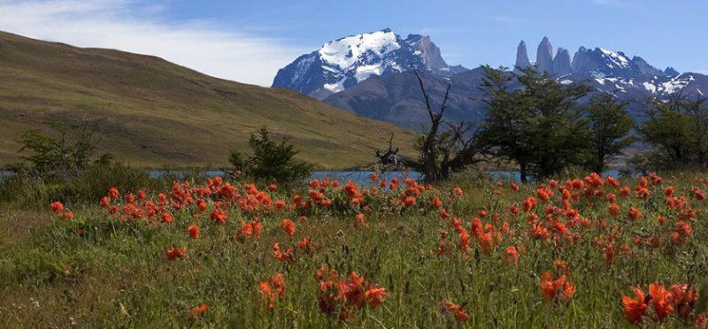 Чили: фотографии по пути в Torres del Paine