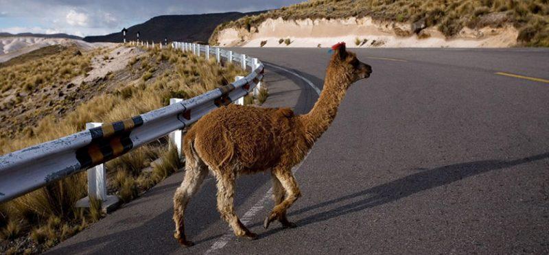 Перу: восьмой фотоальбом. Шоссе номер 26