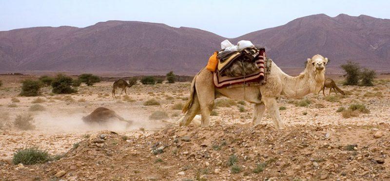 Марокко: путешествие по африканскому королевству. Часть 7