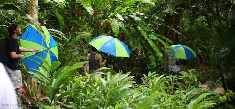 Южные Карибы: фотографии острова Барбадос