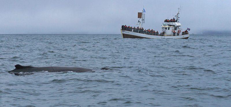 Исландия: Нордюрланд-Эйстра. Фотографии