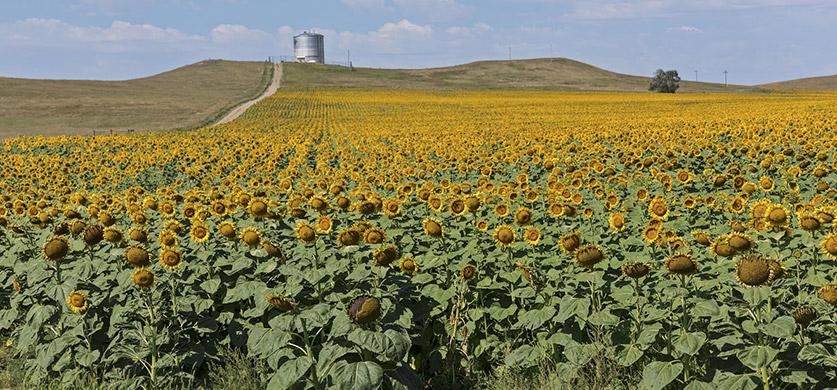 Северная и Южная Дакота после карантина. Часть 1