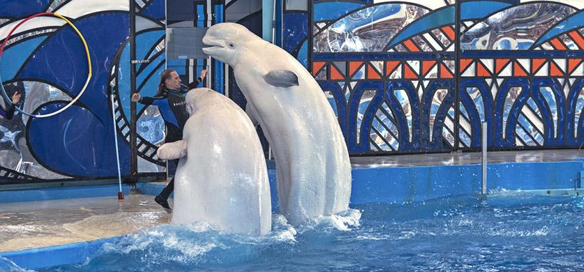 Сочи: дельфинарий. Два