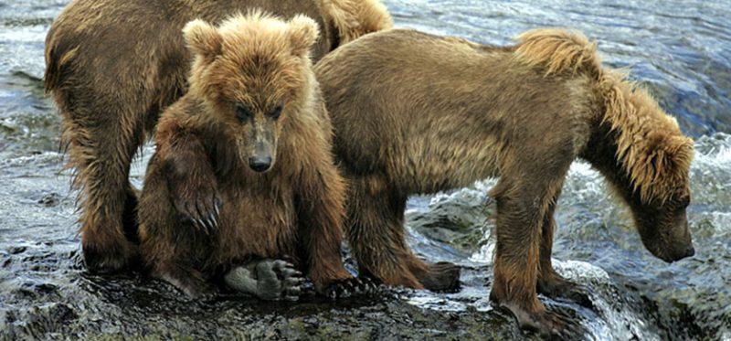 "Аляска: национальный парк ""Катмаи"""