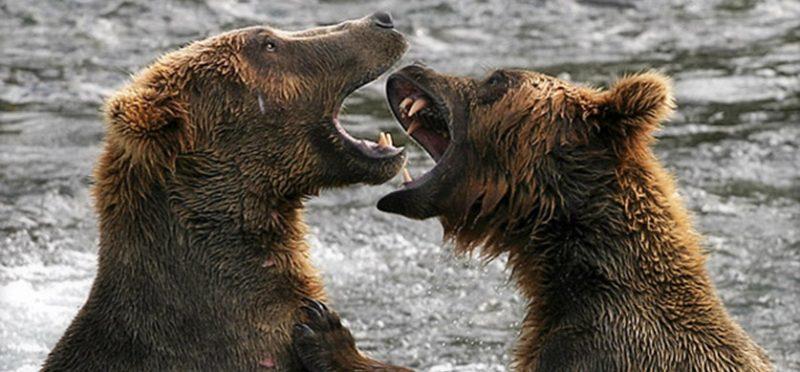 "Аляска: национальный парк ""Катмаи"" – 2"