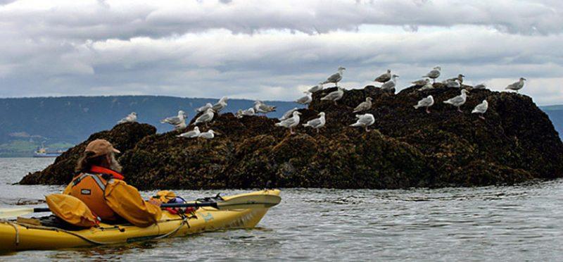 Аляска: фотографии залива Качемак