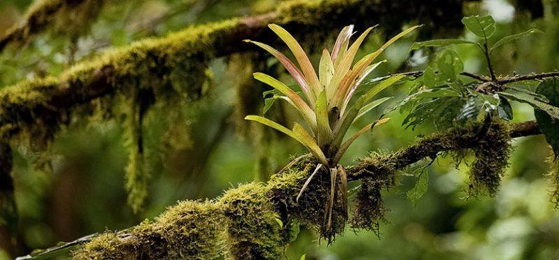 Зеленые холмы Коста-Рики. Фоторассказ. Часть 4