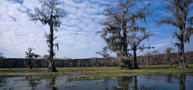 Кипарисовое озеро. Техас
