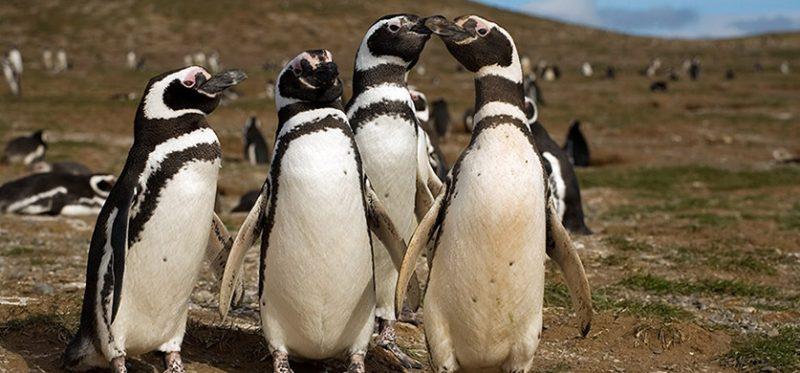 Чили: фотографии с острова Магдалены