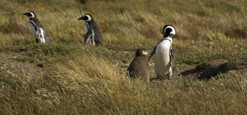 Чили: фотографии заповедника Seño Otway