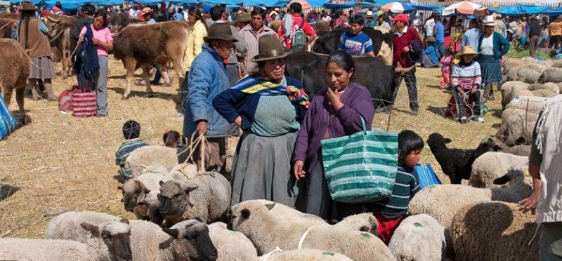 Перу: на птичьем рынке. Фоторепортаж