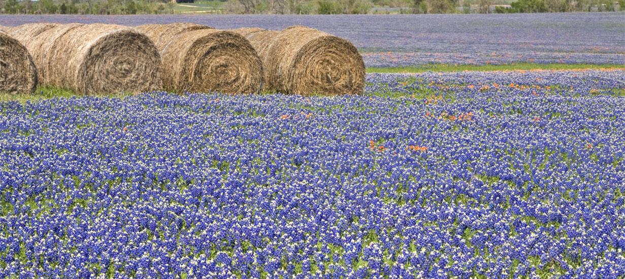 Техас: птицы, звери, и цветы