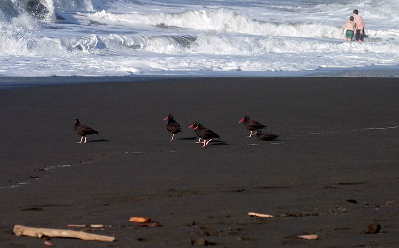 perus northern beaches died - 800×497
