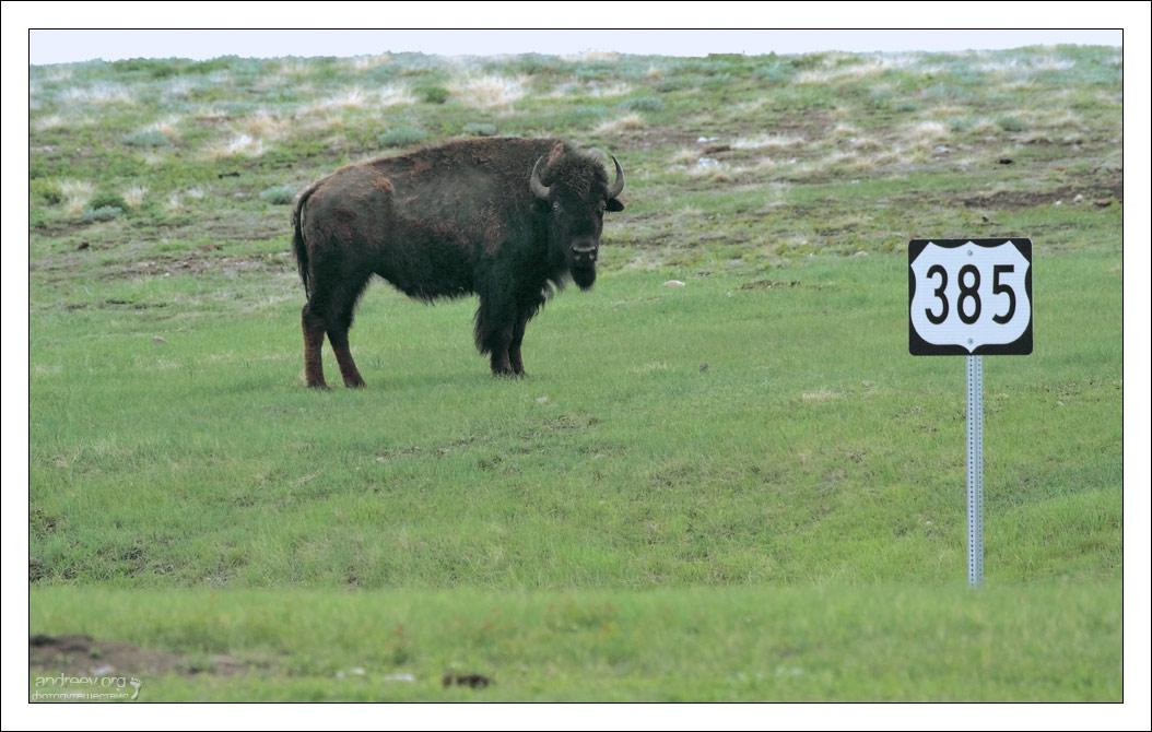 США: Из Южной Дакоты в Йеллоустоун. Фоторассказ