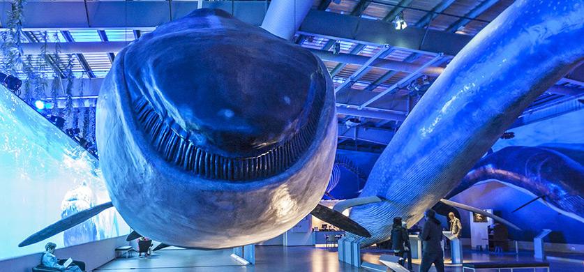 Исландия: музей кита