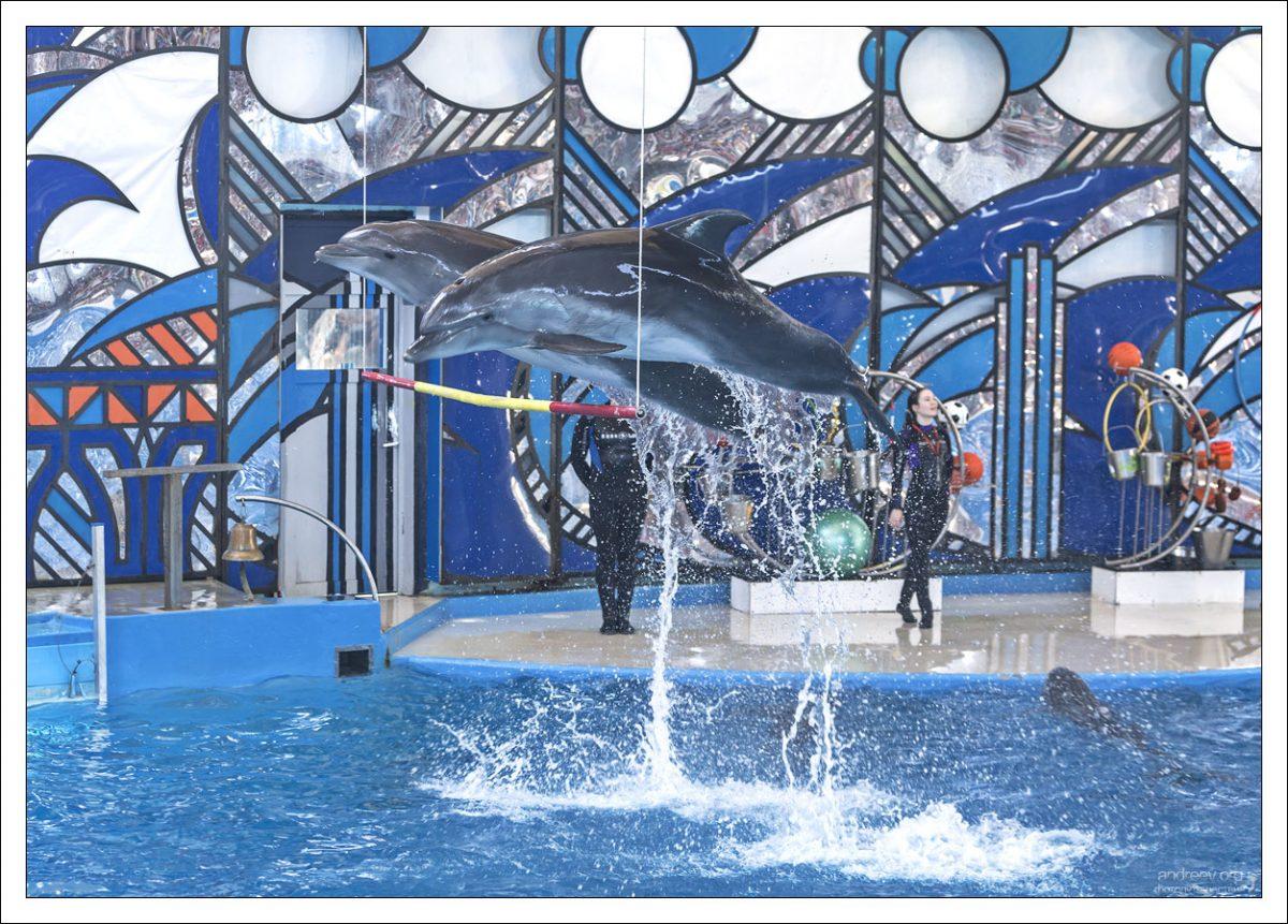 Сочи: дельфинарий. Два. - путешествия и прочее — LiveJournal