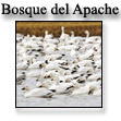 Bosque del Apache Refuge