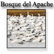 Лес Апачей